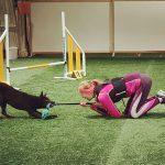 Nainen ja koira leikkivät vetoleikkiä agilitykentällä