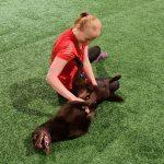 Nainen istuu treenihallin lattialla ja rapsuttaa selällään makaavaa koiraa vatsasta.